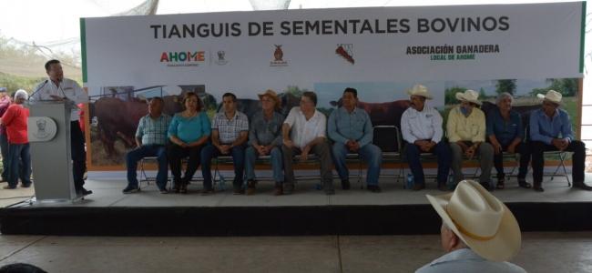 Realizan primer Tianguis de Sementales Bovinos en la Ganadera del Municipio de Ahome.